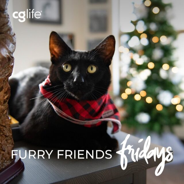Happy Holidays from @ZedChicago, the roommate of our Operations Manager Cristina Filipescu!  Don't worry this is a pre-scheduled post... all of us CG Lifers are at home relaxing and  enjoying our holiday cheer. See ya in the new year Instagram!  #AlreadyHomeForHolidays #FFF #FurryFriendsFridays #CGLife #HappyHolidays