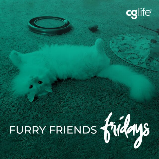 We hit the ground running this week with lots of new clients and faces in the new year. We're ready to copy Ella (short for Cinderella 👑) and relax and play this weekend!  Ella is the princess of our Content Strategist Chris Fisher's house.  #FFF #FurryFriendsFriday #Friday #CGLife #WFH #CatsOfInstagram #Floof